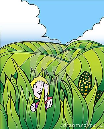 Free Child Adventure: Corn Field Farm Royalty Free Stock Photo - 9252545