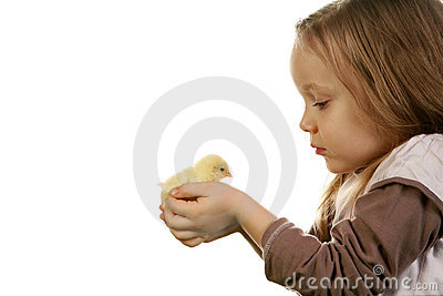 Child and baby chicken
