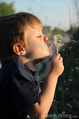 Child blowing on blowball