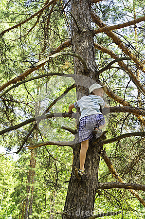 A child climbed on a pine-tree in-field.
