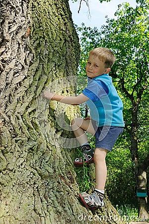Child climbing big tree