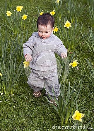 Child in daffodils