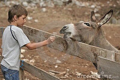 Child and donkey