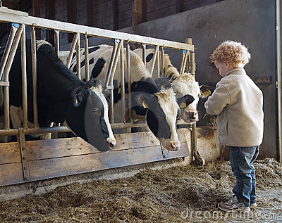 Child farmer and cows