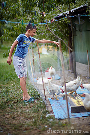 Child feeding chickens in the countryside