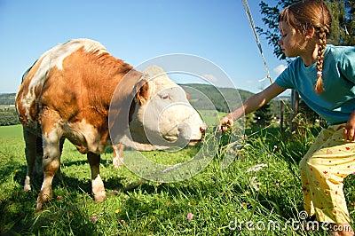 Child feeding a Cow