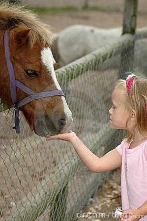 Child feeding pony