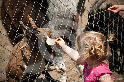 Child feeding zoo animal