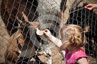 Child feeding zoo animal