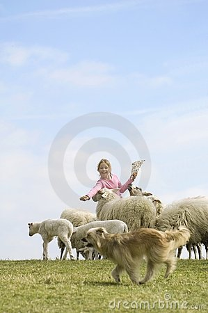Free Child Feeds A Herd Of Sheeps Stock Photography - 2240422