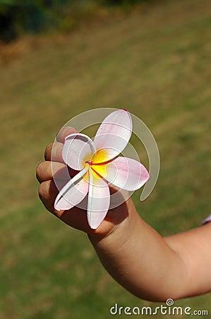 Child hand flower