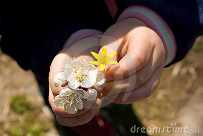Child hands holding flowers
