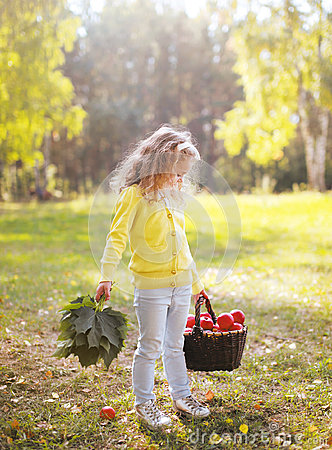 Free Child Holding Basket With Apples Walking In Autumn Royalty Free Stock Images - 45015939