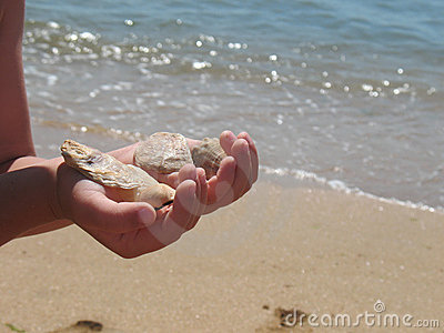 Child holding sea-shells
