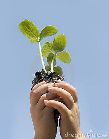 Free Child Holding Small New Budding Plant Stock Image - 6329221