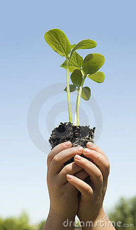 Free Child Holding Small New Budding Plant Stock Photography - 6329222