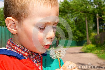 The Child Holds The Seeds Of A Dandelion Stock Photo - Image: 15181720