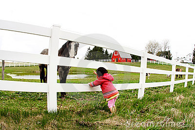 Child and horse staring3