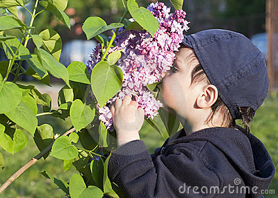 Child and lilac flower