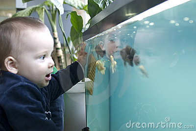 Child looking at fish