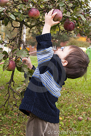 Free Child Picking Apple Stock Image - 18895541