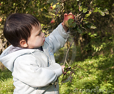 Child picking apple