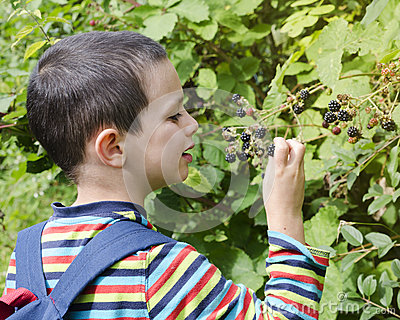 blackberries childhood and boy Finding forgiveness in blackberries he is imagining himself as a young boy in my opinion is, a poem of a missed childhood of picking blackberries in the.