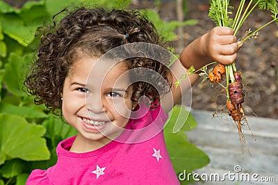 Child picking fresh organic carrots