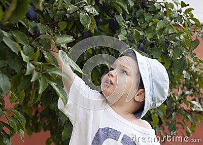 Child picking plum