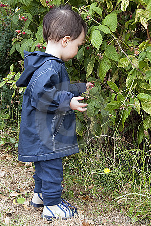 Child and raspberries