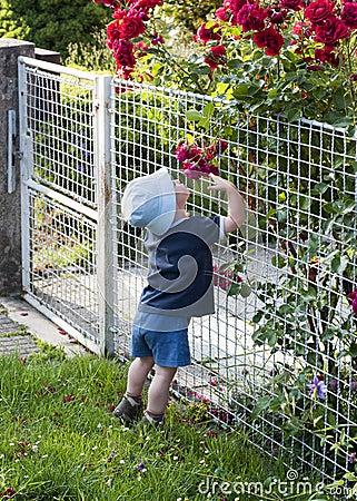 Child in rose garden