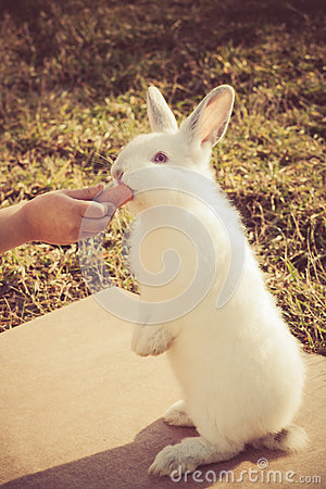 Free Child S Hand Feeding A Little Rabbit Stock Image - 64147041