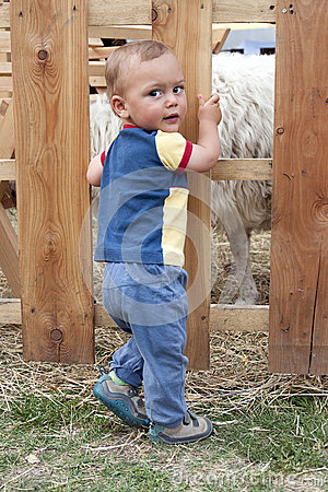 Child at sheep farm or pet zoo