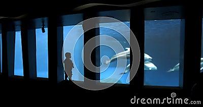 Child silhouette at aquarium