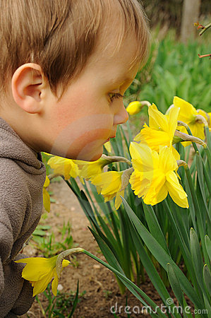 Free Child Smelling Flowers Royalty Free Stock Photography - 19095497