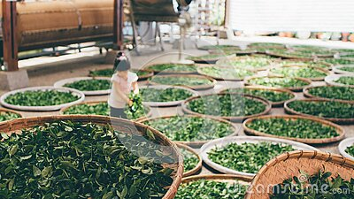 Child Sorting Greens In Baskets Free Public Domain Cc0 Image