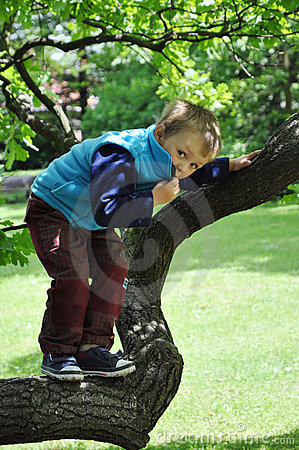 Child standing on tree branch
