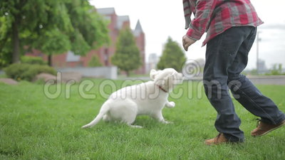 Child stroking and hugging his pet animal friend. Little boy playing with his dog in the park. Child stroking and hugging his pet animal friend. Little boy stock footage