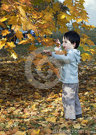 Child under autumn tree