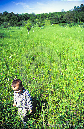 Child walking in meadow