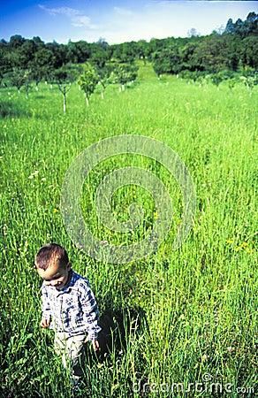 Child walking in meadow