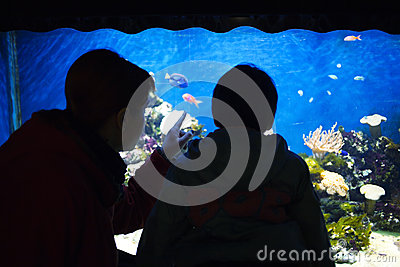 Child watching fishes in aquarium
