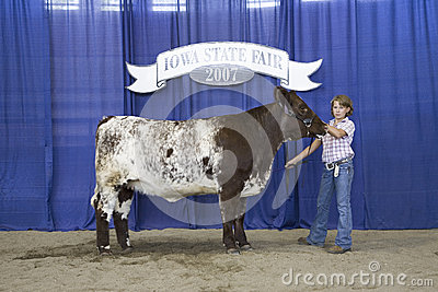 Child winner of Cow Competition Editorial Photo