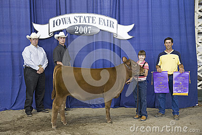 Child winner of Cow Competition Editorial Stock Image