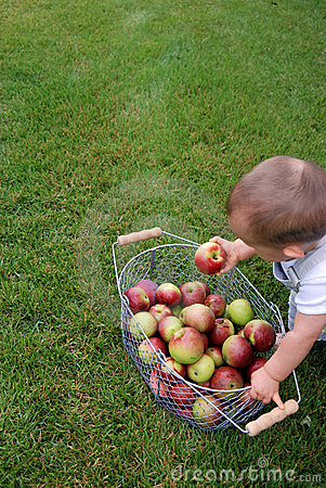 Free Child With Apples Royalty Free Stock Images - 6304099