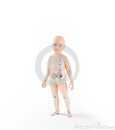 Children anatomy with skeleton
