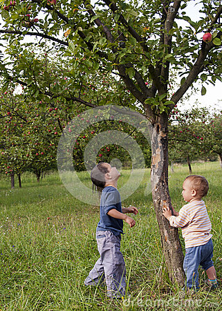 Children in apple orchard