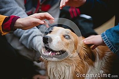 Children caress red border collie dog