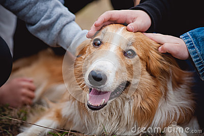 Children caress red border collie dog