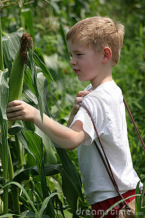 Children In The Corn